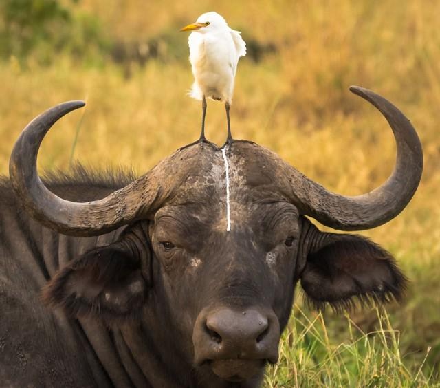 2016年奇趣野生动物摄影比赛获奖作品