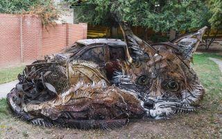里斯本 | 瞧啊 垃圾堆住着一只大狐狸