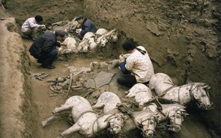"""考古最新发现!秦始皇陵里有个""""动物世界"""""""