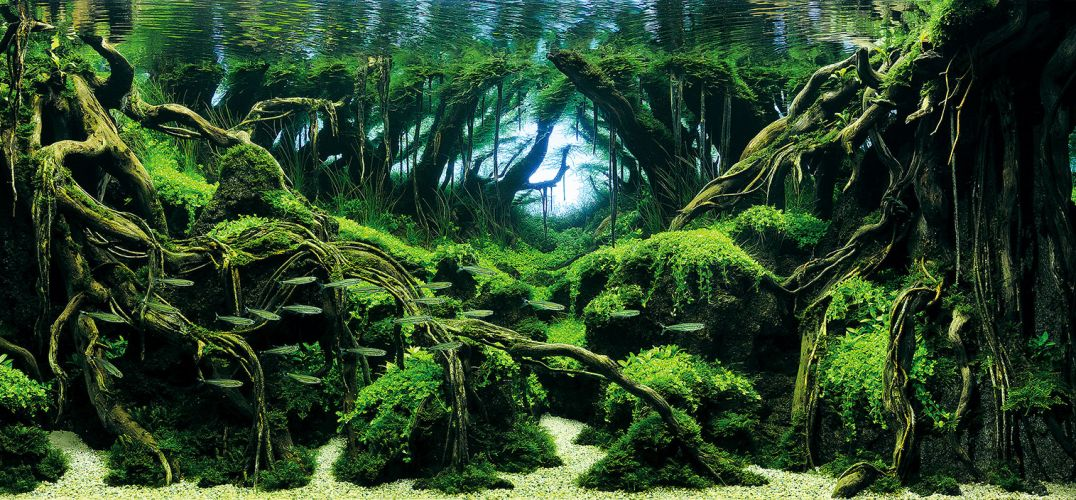 乐坏了鱼儿:美轮美奂的水族馆设计