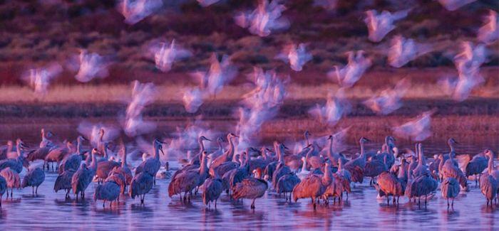 英国博物馆举办年度野生动物摄影展