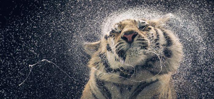 这名摄影师镜头下的动物超越了人类
