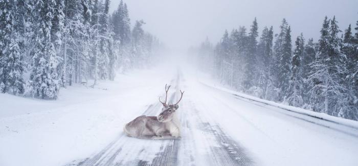 芬兰年轻摄影师Konsta Punkka与森林中的动物们