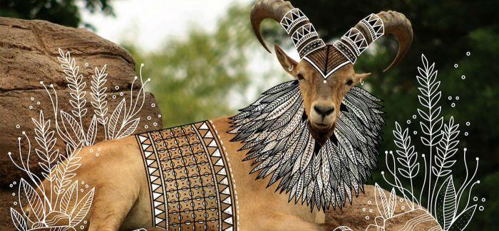 在动物照片上画涂鸦竟然如此精美绝伦!