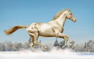 """来自土库曼斯坦的""""天堂""""马"""