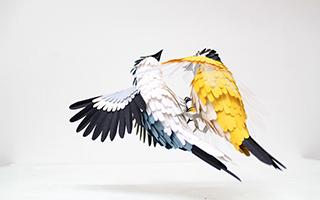 艺术家用纸艺制作出鸟主题立体邮票