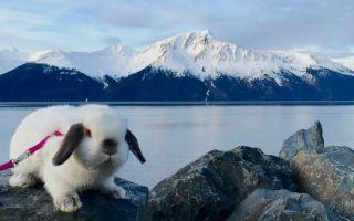 不只是宠物 这只小兔与女主人一同旅行