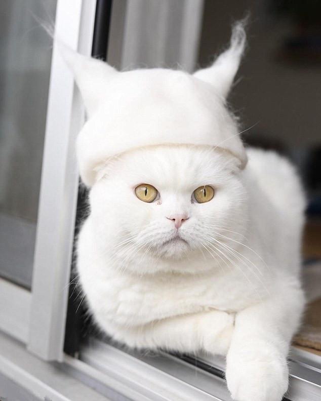 yamazaki居住在东京,他非常喜欢养猫,最近由于在网上分享戴帽子的喵星