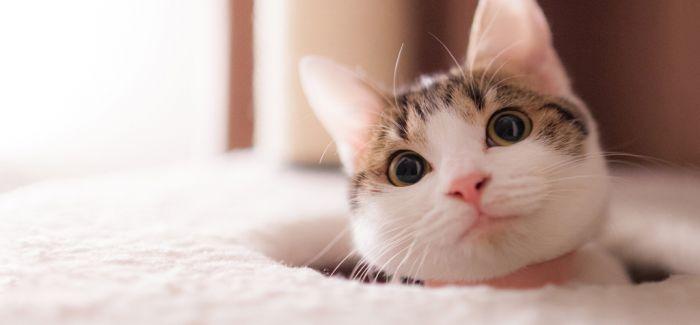 23张动图教你DIY逗猫神器 让你和喵星人更亲密