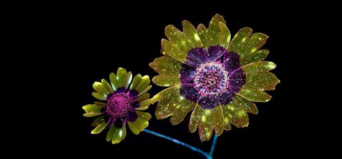 荧光花朵 现实又奇妙