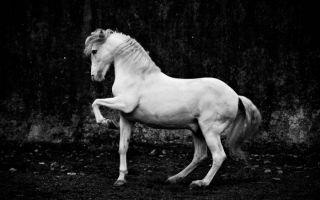马主题摄影:黑白光影之间 马儿原来可以这么美