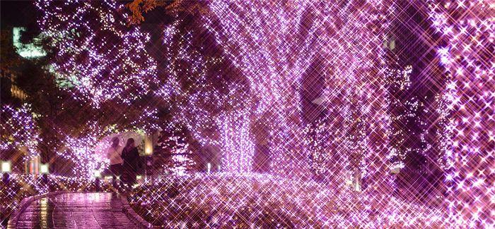 二月依旧浪漫!全长888公尺灯海将新宿染为樱花粉
