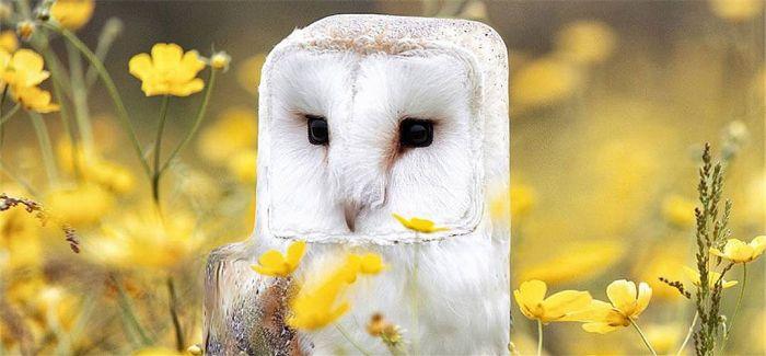 当动物都变成方方正正的方块模样会是如何?