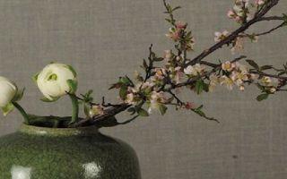 清凉花肆丨春来折枝 春季体验课