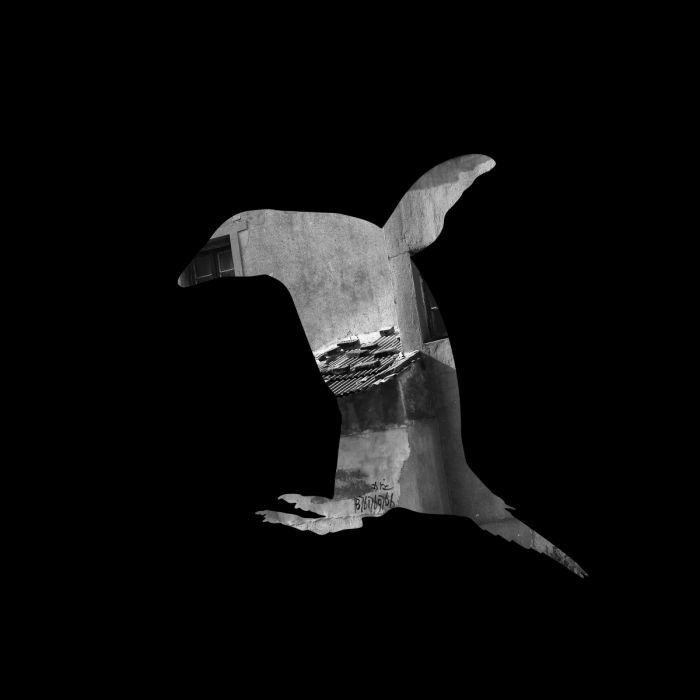 动物剪影 张宏川摄影作品