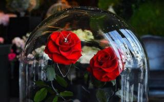 """现实版""""美女和野兽""""玫瑰 持续3年没有水和阳光依然存活"""