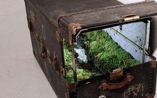 山水与它们的产地?纽约艺术家将风景装进行李箱
