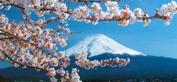 慢步在春天的京都 别错过这3处日人私藏的赏樱景点