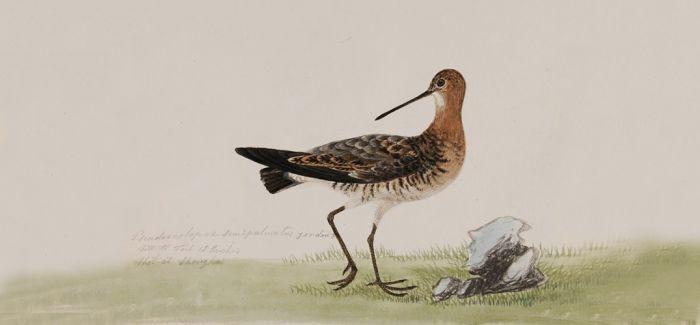保利博物馆呈现19世纪手绘中国鸟类图谱
