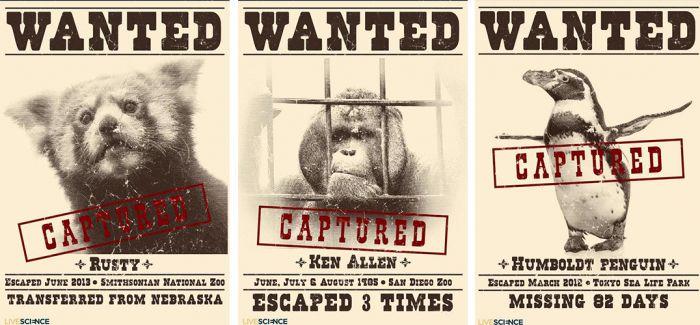 """动物界的8大""""越狱行为艺术家"""""""