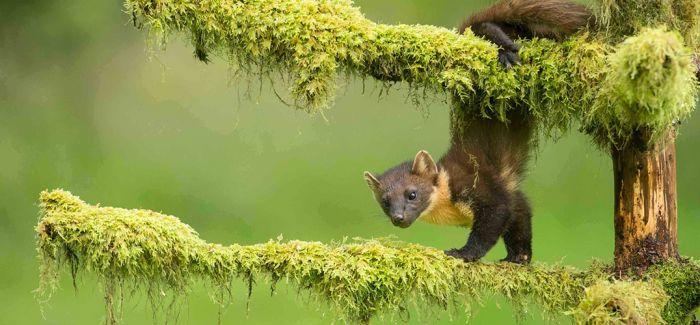 英哺乳动物摄影大赛聚焦动物可爱与奇妙