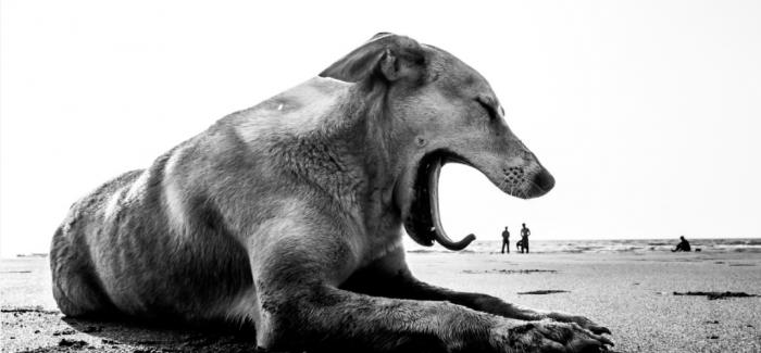 人们在受伤害时会变得愤怒 但狗总会原谅