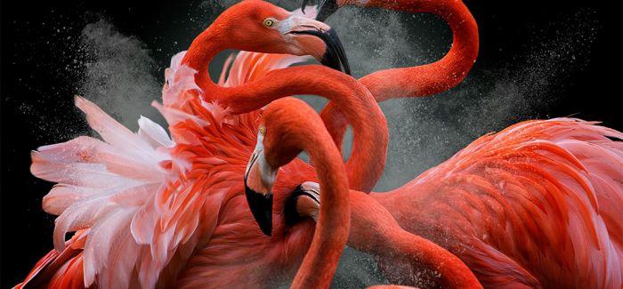色彩的魅力:第11届国际彩色摄影奖揭晓