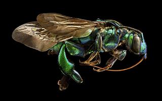 摄影师和昆虫的故事:如何将一只小虫子拍到3米长