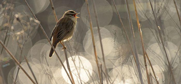 飞翔的精灵:年度鸟类摄影师大赛作品欣赏