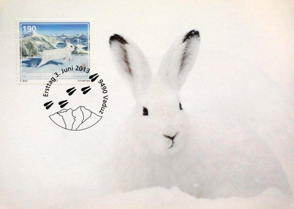 《 阿尔卑斯地区的幼小动物》