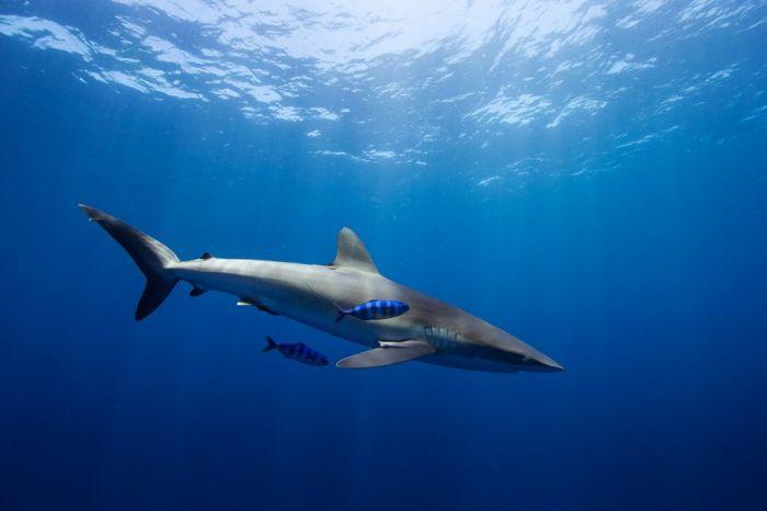 巴哈马群岛的海洋生物