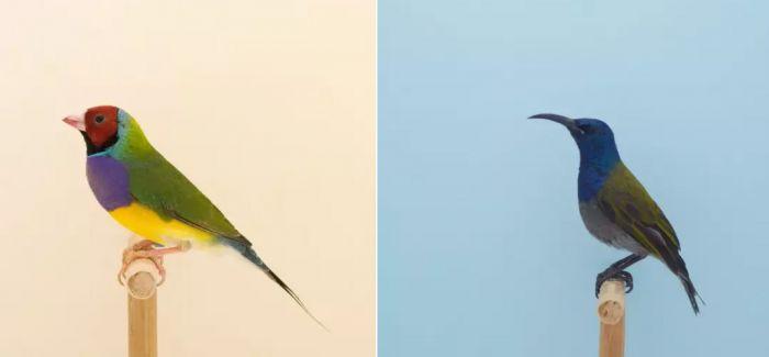 摄影师镜头下的鸟儿