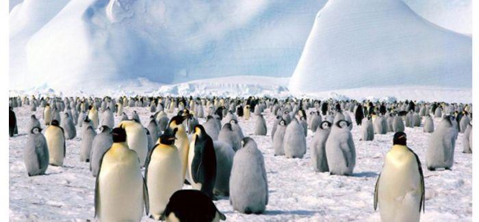 南极双年展:参与者日记再现奇幻探险的艺术之旅