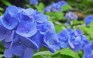 就用当地人的祭典与活动感受时入初夏的东京