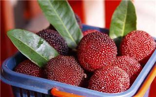 又到采摘旺季 6月起这些水果都熟了