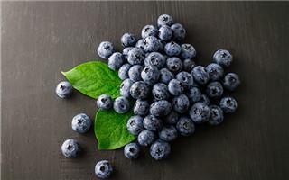 英美研究:喝蓝莓汁能改善老年人脑功能