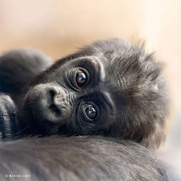 非洲:惊人的野生动物肖像