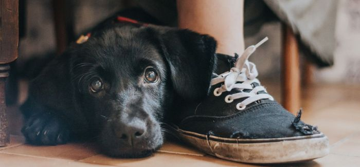 2017年度狗狗摄影师大赛作品出炉 被汪星人治愈了