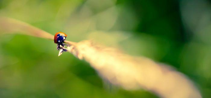 微观世界的小居民 微距镜头下的植物与昆虫