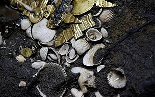 墨西哥发现5个世纪前宝藏 幼狼被黄金装饰后献祭