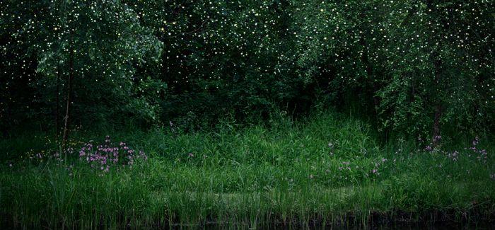 用心去感受森林的律动