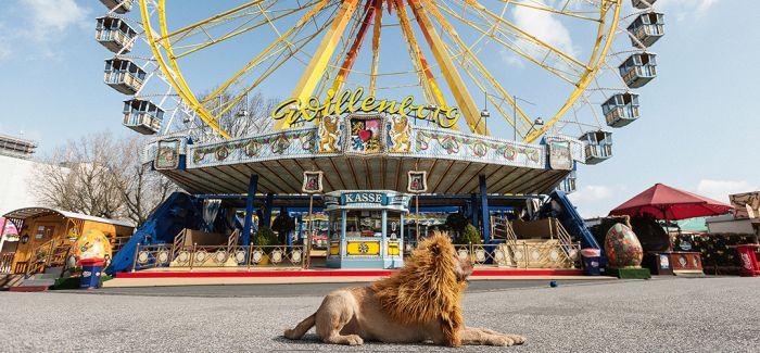 """我感觉 这只""""狮子""""的内心其实是拒绝的!"""