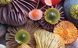 老人说过:越好看的蘑菇毒性越强!