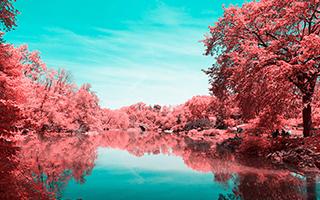当纽约的树全变成红色的时候!