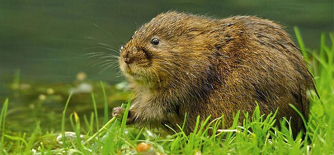 可爱的小动物原来是表情包潜力股_视觉_视觉_凤凰艺术