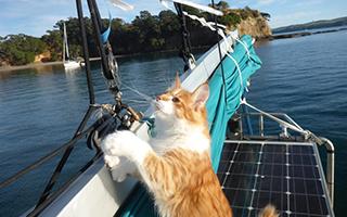 当你碰到了一只喜欢旅行的猫