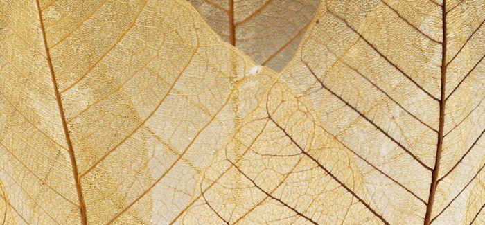 秋天到了 来个落叶之碗如何?