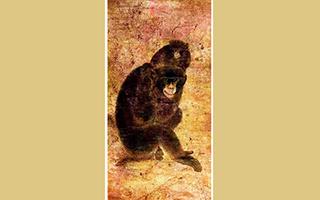3.6个亿!这俩猴为什么这么值钱?