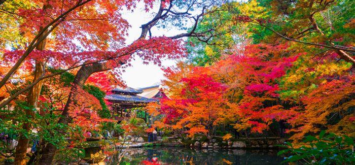 北海道之秋 美丽短暂而绚烂