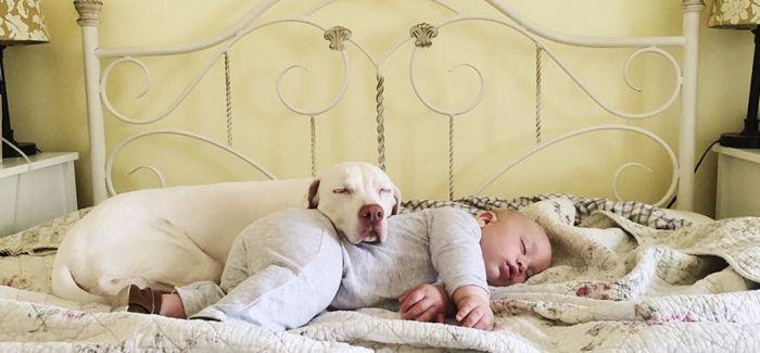 关于宠物与儿童的故事